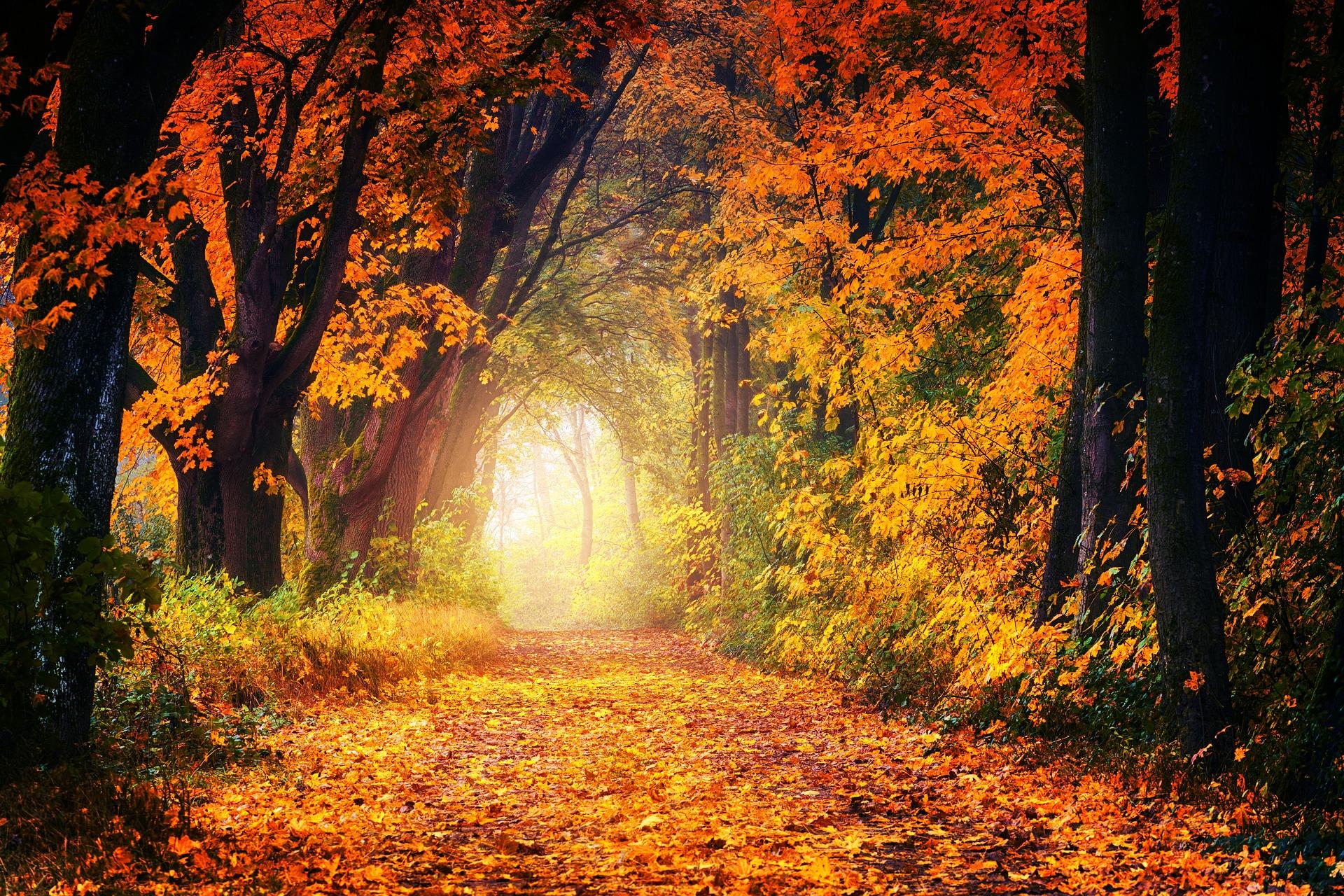 Allee mit buntem Herbstlaub und Leuchten in der Ferne
